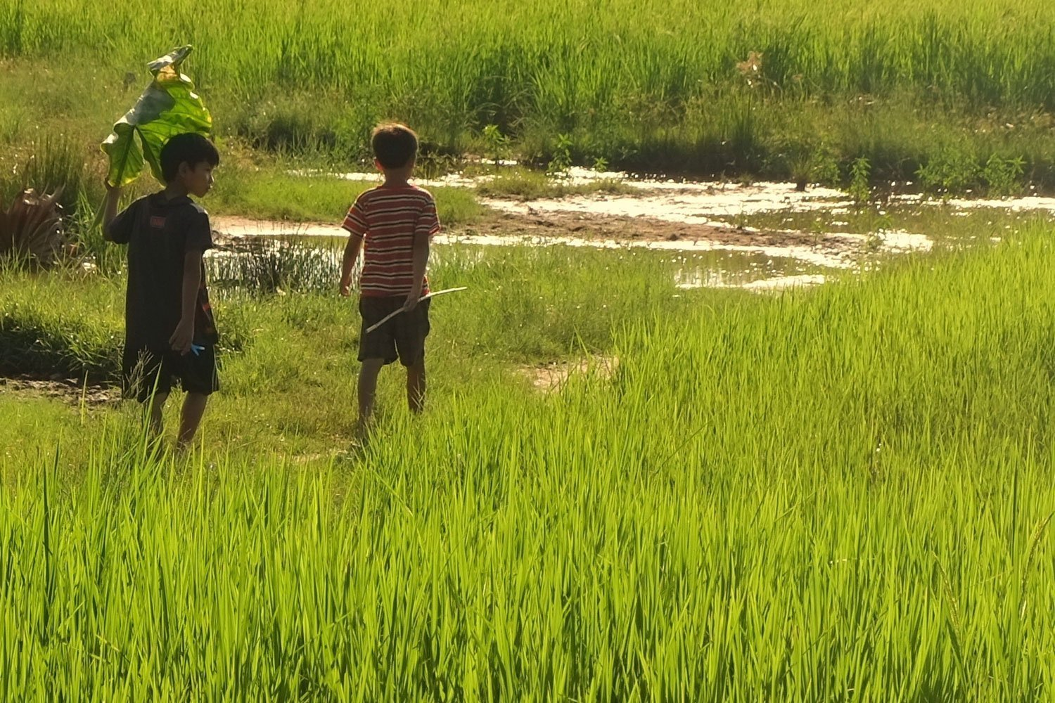 Two boys walk along a grassy marsh in Cambodia