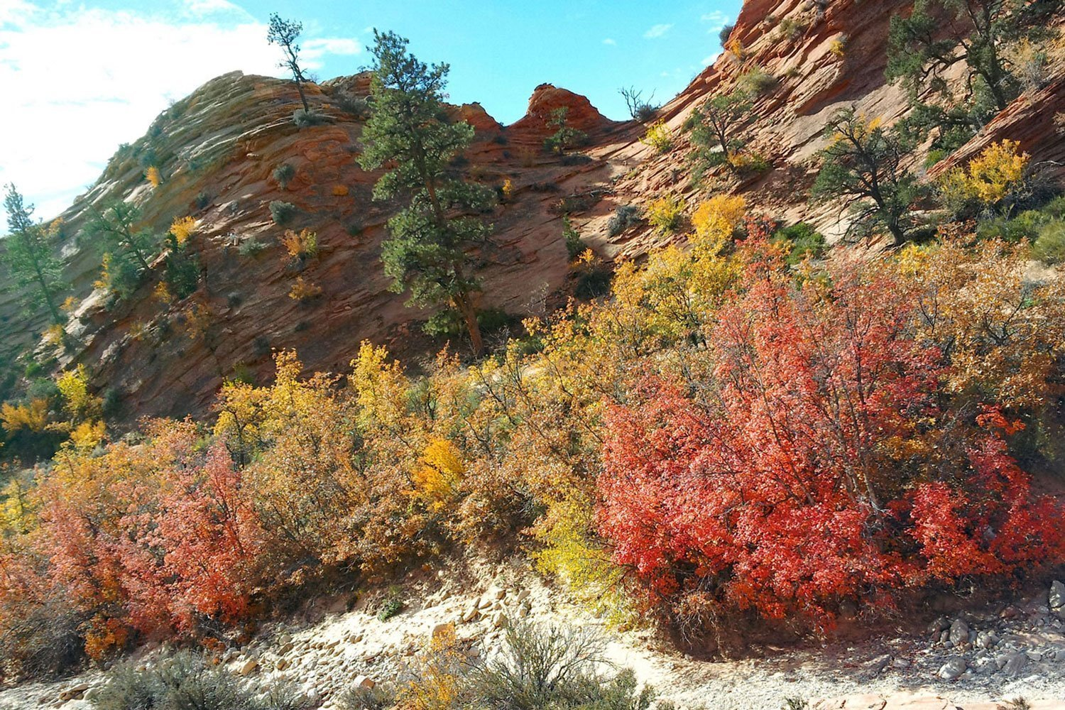 Canyon road trip, autumn colors in Zion National Park, Utah