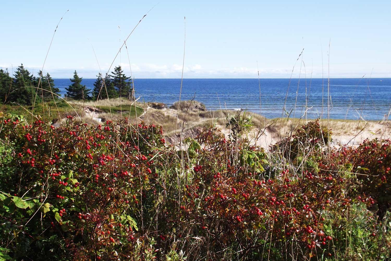 Grassy sand dunes drop into the ocean on PEI's coastline