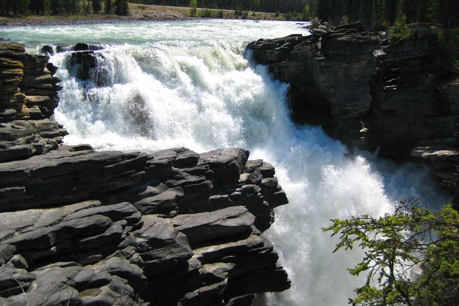 Powerful Athabasca Waterfalls thunder past rock and trees