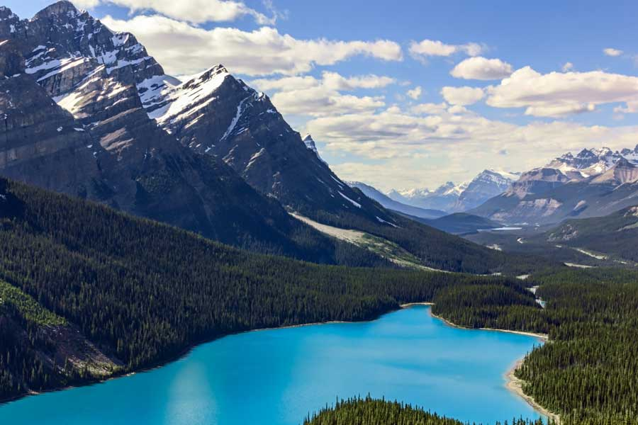 Perfectly turquoise waters of Lake Peyto, surrounded by thick forests, towering mountain peaks and blue sky above