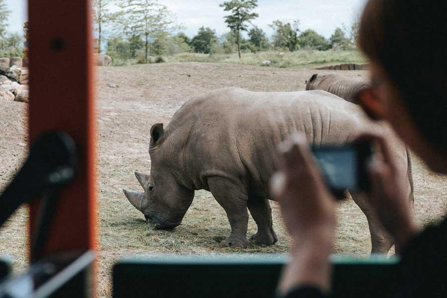 Virtual tours of wildlife, African safari
