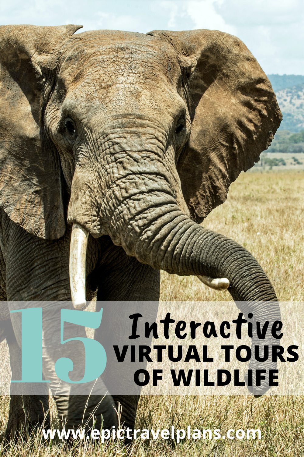 Interactive virtual tours of wildlife, from safaris to the oceans