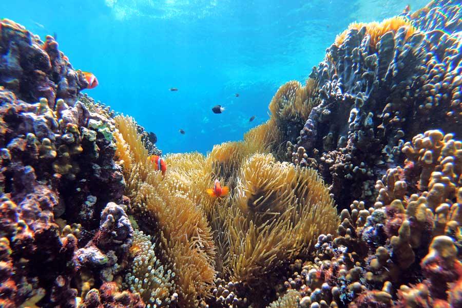 Virtual tours of wildlife, reef in Taiwan