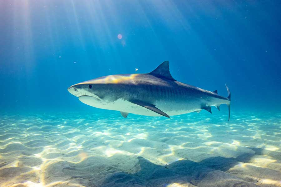 Virtual tours of wildlife, dive with sharks in Bahamas