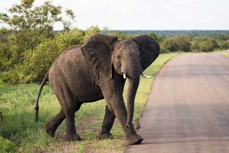 African elephant up-close, Christmas vacation ideas for couples, Intrepid Travel