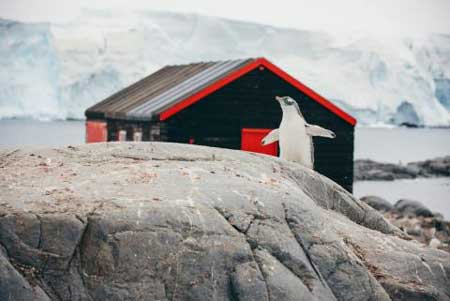 Penguin in Antarctic, Christmas vacation ideas for couples, Intrepid Travel