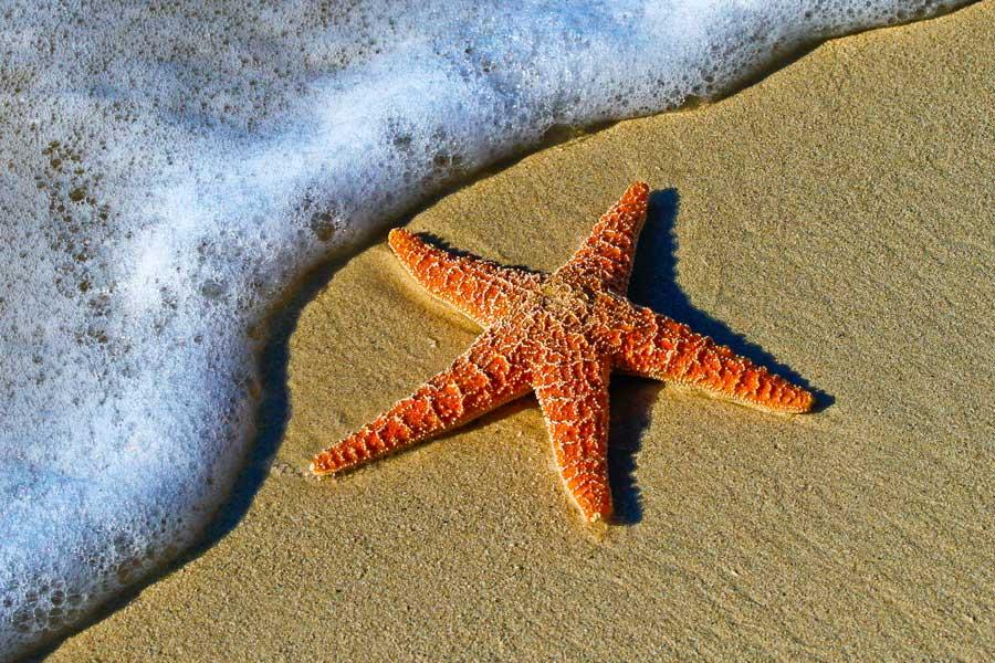 Starfish at Key West Florida beach, Disney cruise Bahamas